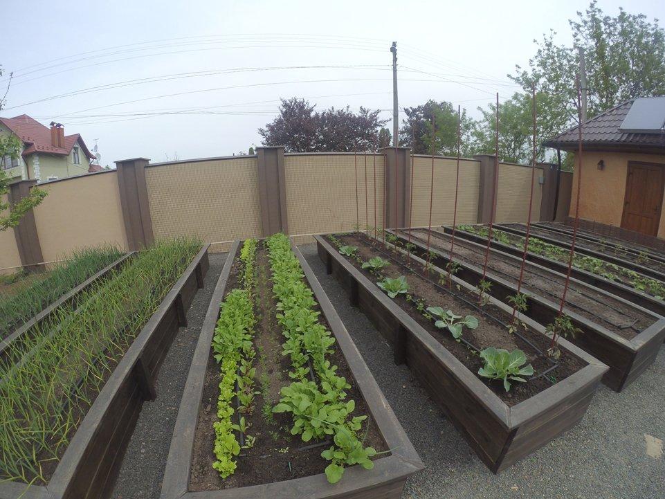 Японский сад.  Г. Измаил.  Капельный полив декоративного огорода.