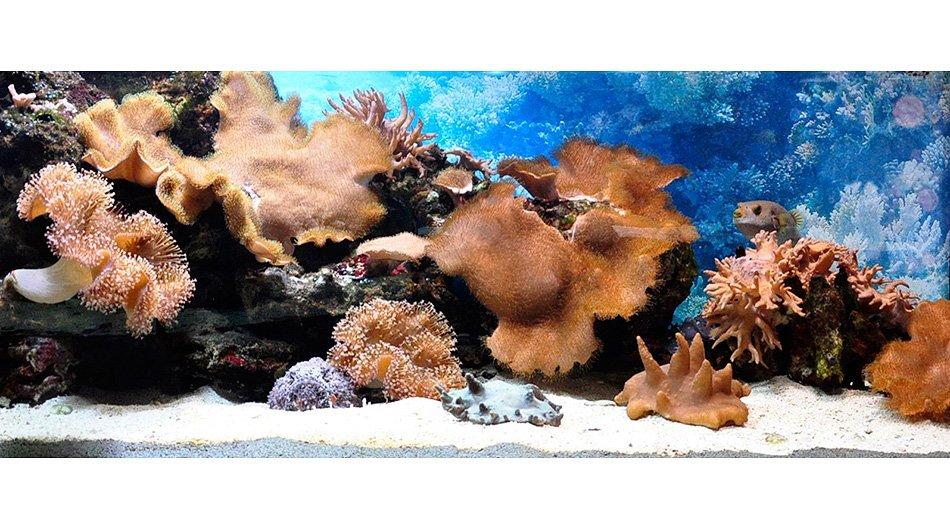 Мягкие кораллы, морской, 1500 л