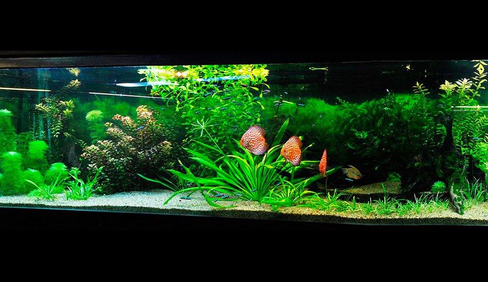 Подводный сад с дискусами, 1000 л