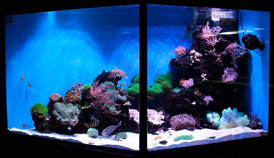 Морской рифовый аквариум, 1000 л