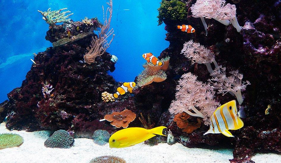 Морской аквариум, 960 л