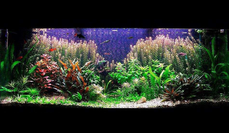 Подводный сад в голландском стиле, 400 л