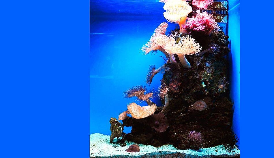 Морской мини-аквариум, живые кораллы и водоросли, 100 л